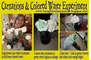 77 Best Kindergarten   Plants Images On Pinterest