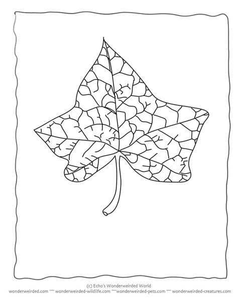 Coloring Outlines by Leaf Outlines Printable Coloring Home