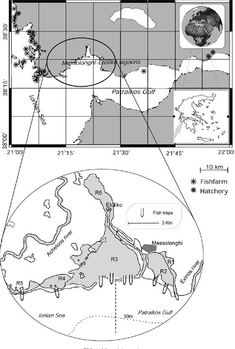 habits sea feeding bass trophic level dicentrarchus pdf