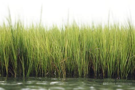 marsh grass items  find beautiful pinterest