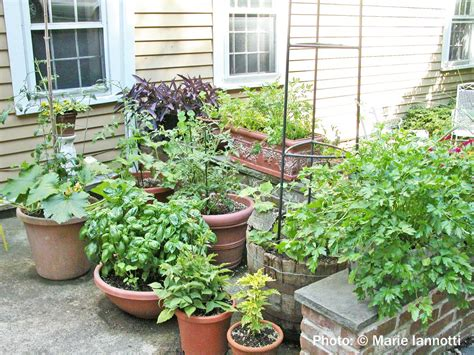 17 best images about small vegetable garden ideas on