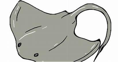 Stingray Sting Drawing Rays Drawings