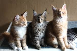 Cats Share Just 5 Personality Types