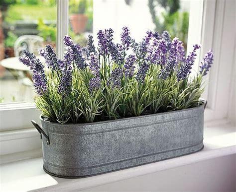 planter lavande en pot 25 best ideas about indoor plant decor on plant decor botanical decor and plants