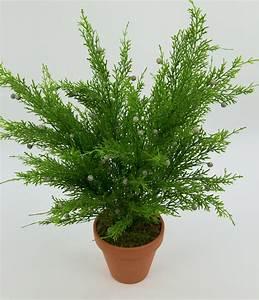 Tulpenzwiebeln Im Topf Pflanzen : zedernbusch 48cm im topf cg kunstpflanzen k nstliche zeder ~ Lizthompson.info Haus und Dekorationen