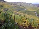 Alsace wine - Wikipedia