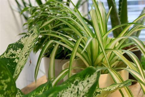 10 Sonne Liebende Zimmerpflanzen
