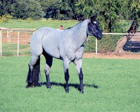 final notice roan horse horses quarter