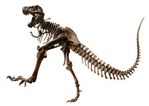 Tyrannosaurus Rex Dinosaur Bones