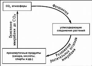 Где в ульяновске удалить бородавки