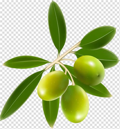 green olive clipart   cliparts  images