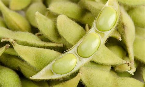 cuisiner des flageolets secs légumes pour la vitalité variétés de haricots trucs pratiques