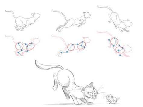 images  drawing cat anatomy references
