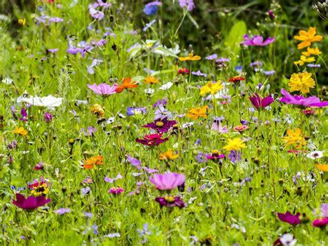 Garten Norden Pflanzen by Natur Und Kultur Um Weltenschwann Und Spe 223 Hardt