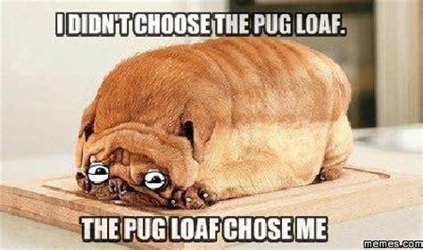 Loaf Meme - pug loaf memes com