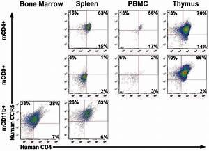 Hcd4  R5  Ct1 Mouse Mononuclear Cells Isolated From Bone Marrow  Spleen