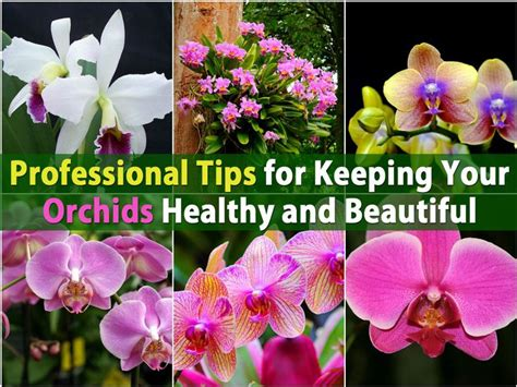 reblooming orchids phalaenopsis phalaenopsis orchid reblooming tips related keywords phalaenopsis orchid reblooming tips long