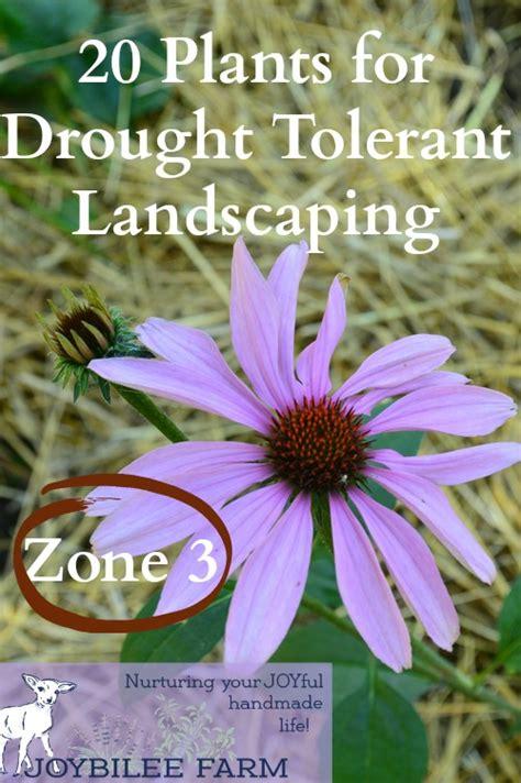 zone 10 plants list 20 drought tolerant plants for your zone 3 garden