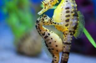 Pictures of Cute Baby Animals Seahorse