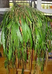 Cactus Houseplants Identification