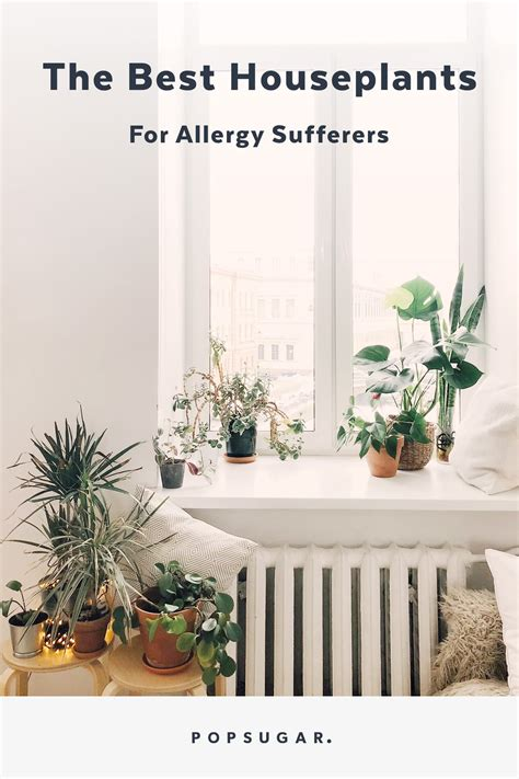houseplants  allergy sufferers popsugar fitness