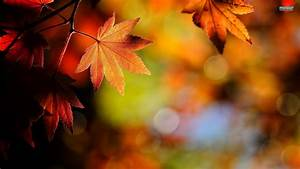 Autumn Leaves wallpaper | 1920x1080 | #70290