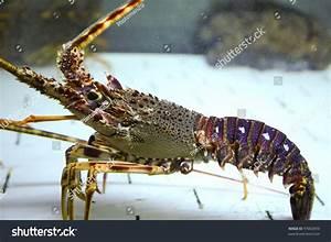 Lobster Aquarium Restaurant Lobster Restaurants Seafood ...