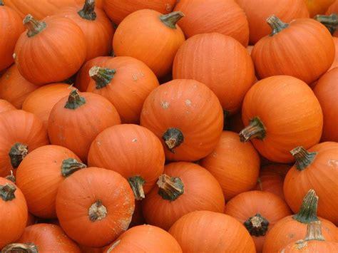 Autumn Pumpkin Wallpaper by Fall Pumpkin Wallpapers Wallpaper Cave
