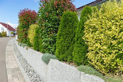 Lebender Sichtschutz Im Garten Aus Grünen Pflanzen