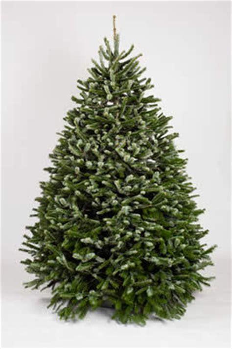 Freshcut Christmas Trees Los Angelessan Fernando Valley