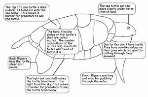 Turtle Are The Best