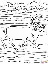 Elk Coloring Running Pages Printable Reindeer Finnish Forest Supercoloring Version Drawing Wapiti Paper Categories sketch template