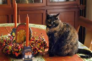 thanksgiving cat give thanks for family and family pets