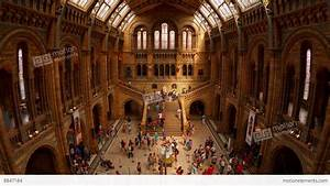 Natural History Museum Indoor Timelapse Stock video ...