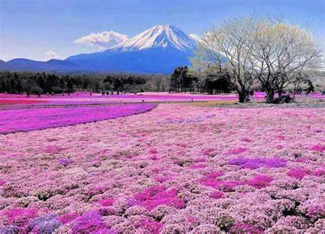 ayo  japan travel fair  tiket gratis pp  jepang lho