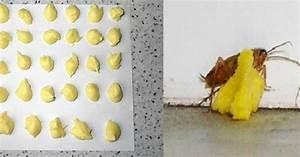 Tuer Les Cafards : comment se d barrasser des cafards une fois pour toute essayez cette astuce simple elle agit ~ Melissatoandfro.com Idées de Décoration