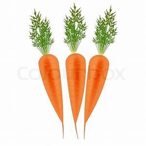 Three Orange carrots vector illustration   Stock Vector ...