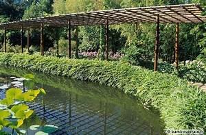 Haie de bambous une idee de plus en plus seduisante for Wonderful photo jardin avec palmier 3 haie de bambous une idee de plus en plus seduisante