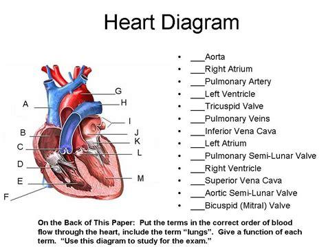 Unit 7 Part 1 Blood And Heart  Heart Diagram