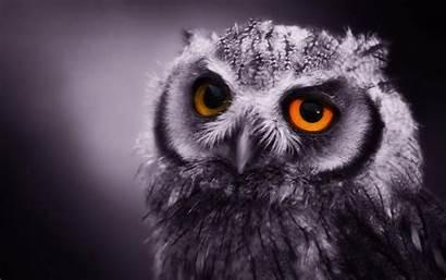 Owl Funny Desktop Animal Owls Backgrounds Background