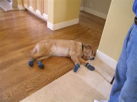 dog booties help protect your hardwood floors from