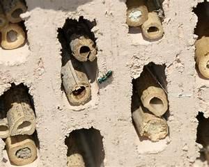 Tiere Im Insektenhotel : bewohner des insektenhotels bei bastians nabu eisenberg leiningerland ~ Whattoseeinmadrid.com Haus und Dekorationen