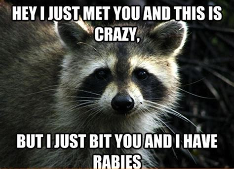Funny Raccoon Meme - i just bit you funny animal meme