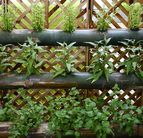Bamboo Vertical Garden by Vertical Gardens Wall Gardens And Living Walls Lush