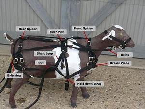 Goat Harness Images