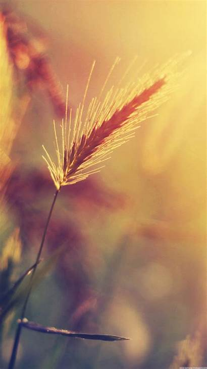Lock Screen Iphone Warm Girly Wheat Wallpapers