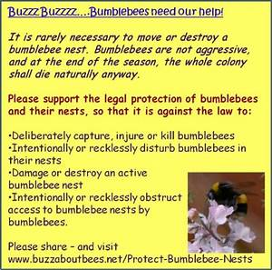 5 Reasons To Protect Bumblebee Nests