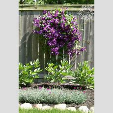 10 Best Hardy Perennial Flowers  On Sutton Place