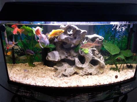aquarium eau douce debutant presentation de mon aquarium debutant 60l eau douce