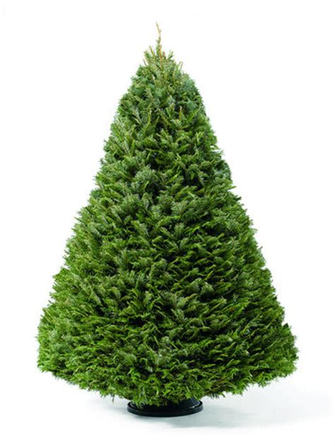 best rated fresh trees delivered to home countdown see the national tree light up today and get your own